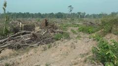 Deforestation, Cambodia Stock Footage