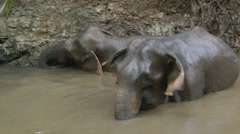 Elephant bathing, Cambodia Stock Footage