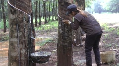 Tapping rubber, Cambodia - stock footage