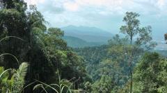 Lowland rainforest, Malaysia Stock Footage