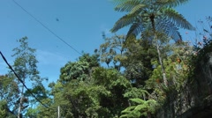 White-bellied swiftlets, Malaysia Stock Footage