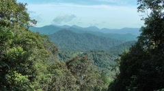 Montane rainforest, Malaysia Stock Footage