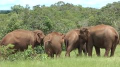Asian Elephant Rehabilitation Stock Footage