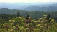 Bees in Wild:  Blue Ridge Mountains Stock Footage