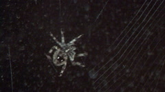 Spider building a web Stock Footage