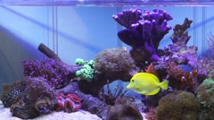 Salt water fish tank with reef coral aquarium Stock Footage