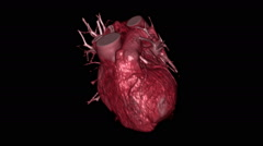 3D CT scan reconstructions showing a beating human heart Stock Footage