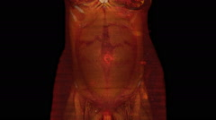 3D CT scan showing a woman 32 weeks pregnant Stock Footage