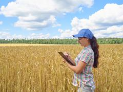 Farmer girl in a plaid shirt controlled his field wheat - stock photo