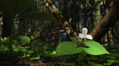 Flower in the forest Stock Footage