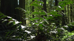 Plant to forest tracking shot Stock Footage
