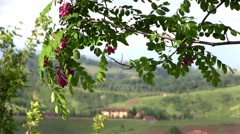 Tuscany landscape, rustling leaves in foreground, and a villa in soft focus. - stock footage