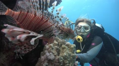 Underwater videographer, shooting lionfish. Diving in the Red sea near Egypt. Stock Footage