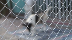 Injured stray dog blur behind fence, abandon concept - stock footage