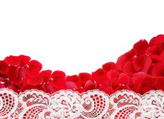 Beautiful red rose petals and white lace on white background Stock Photos