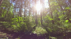 Sunshine in the wood Stock Footage