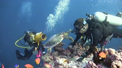 Friendly intercourse with the Hawksbill turtle. - stock footage