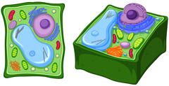 Close up diagram of plant cell Stock Illustration