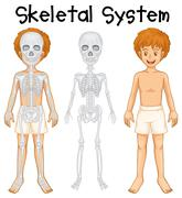 Skeletal system in human boy Stock Illustration