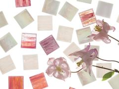 Smalt and Pink Aquilegia Stock Photos
