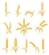 Wheat ears or rice icons set. Agricultural symbols isolated on white background - stock illustration