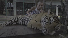 Tourist woman petting sleeping tiger in Phuket, Thailand. Stock Footage