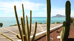 Cacti on the Spanish coast Stock Footage