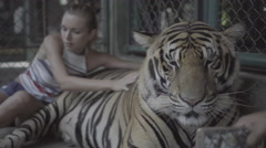 Tourist woman petting big tiger and taking photo. Stock Footage