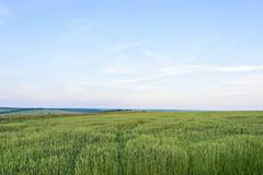Beautiful landscape with green grain filed at sun set in moldova. - stock photo