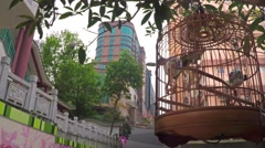 Bird's cage hanging on the tree at the entrance to Yuen Po Street Bird Garden. Stock Footage