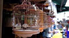 Lively songbird in the wooden cage and crowded market at the background - stock footage