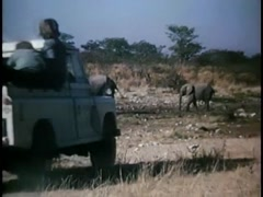 Pick-up truck driving by elephants in African bush, 1970s Stock Footage
