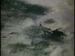 Point of view from helicopter of animals running in African brush, 1970s Stock Footage