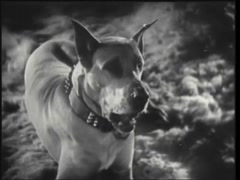 Tilt down shot of Great Dane yawning and lying down to relax, 1930s Stock Footage