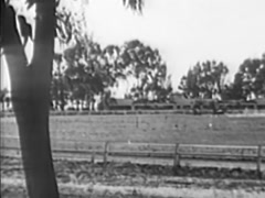 Long shot of race horses coming around the bend, 1940s Stock Footage