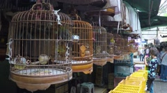 Long row of birdcages with songbirds panoramic view. Stock Footage
