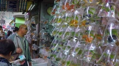 Asian People hunting for goldfish at the local market in Hong Kong. - stock footage