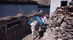 Donkeys in the Nepal village - stock footage