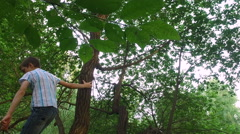 Teen boy climbs on old tree. - stock footage