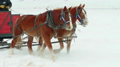 Close up of horses trotting in the snow Stock Footage