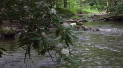 Mountain Stream with Rhododendron Maximum Stock Footage