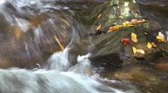 Mountain Stream with Autumn Foliage Stock Footage