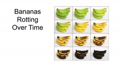 Bananas Rotting Over Time - stock footage