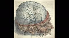 Andreas Vesalius, Anatomist Stock Footage