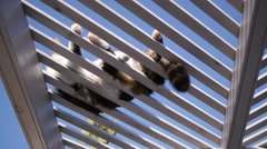 Cat lying on perch against sun Stock Footage