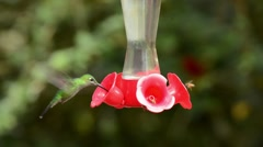 Several species of tropical hummingbirds at feeder Stock Footage