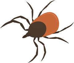 Vector illustration of brown tick - stock illustration
