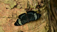 Tropical Butterfly on tree Stock Footage