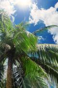 Tropical Background. Palm leaves Stock Photos