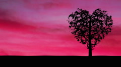 Heart Shaped Tree and Pink Sky Stock Footage